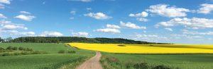 Landskap med Ålleberg